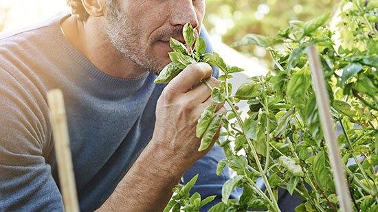 نقش ویتامین ها در برگشت حس بویایی