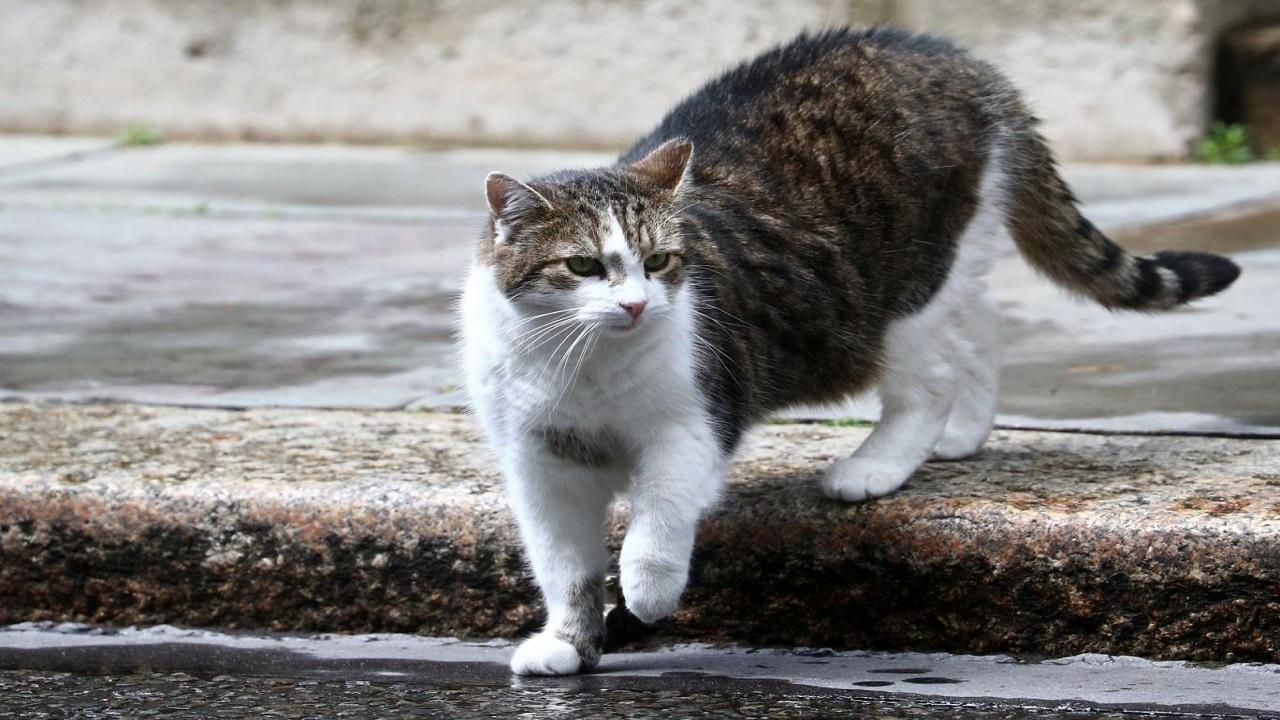 گربه،گرسنه