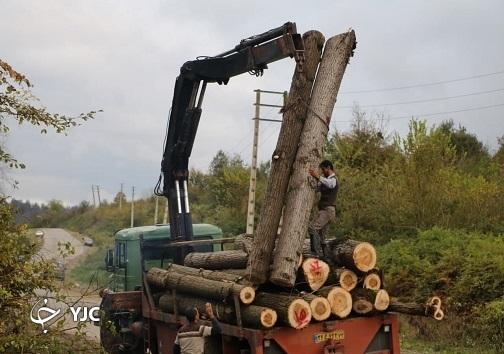 قطع درختان یک موقوفه، کشمکش جدید منابع طبیعی و اوقاف + فیلم