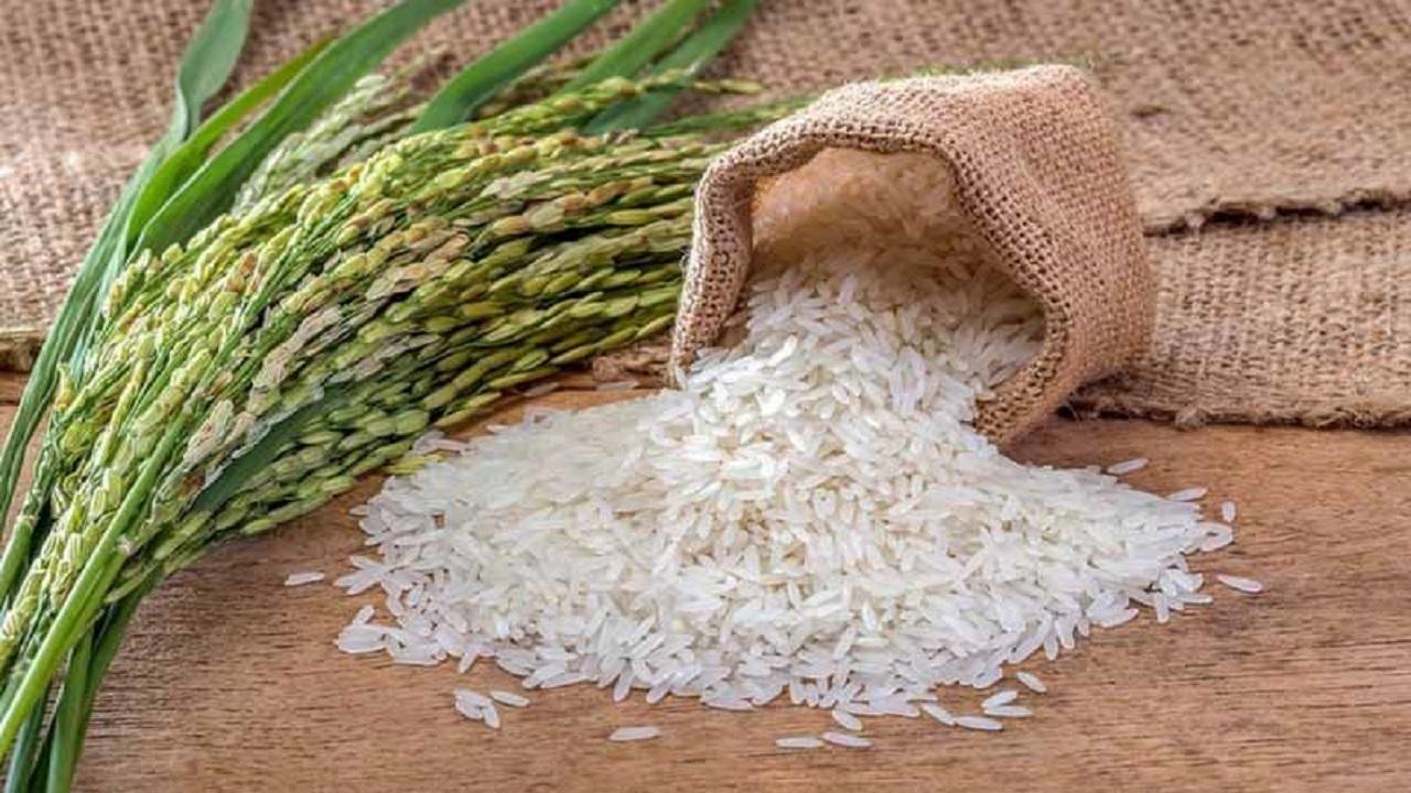 پیشنهاد واردات برنج پرمحصول / نرخ برنج هندی بالای 20 هزار تومان است