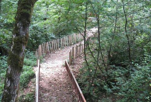 پارکهای جنگلی ایران را میشناسید؟
