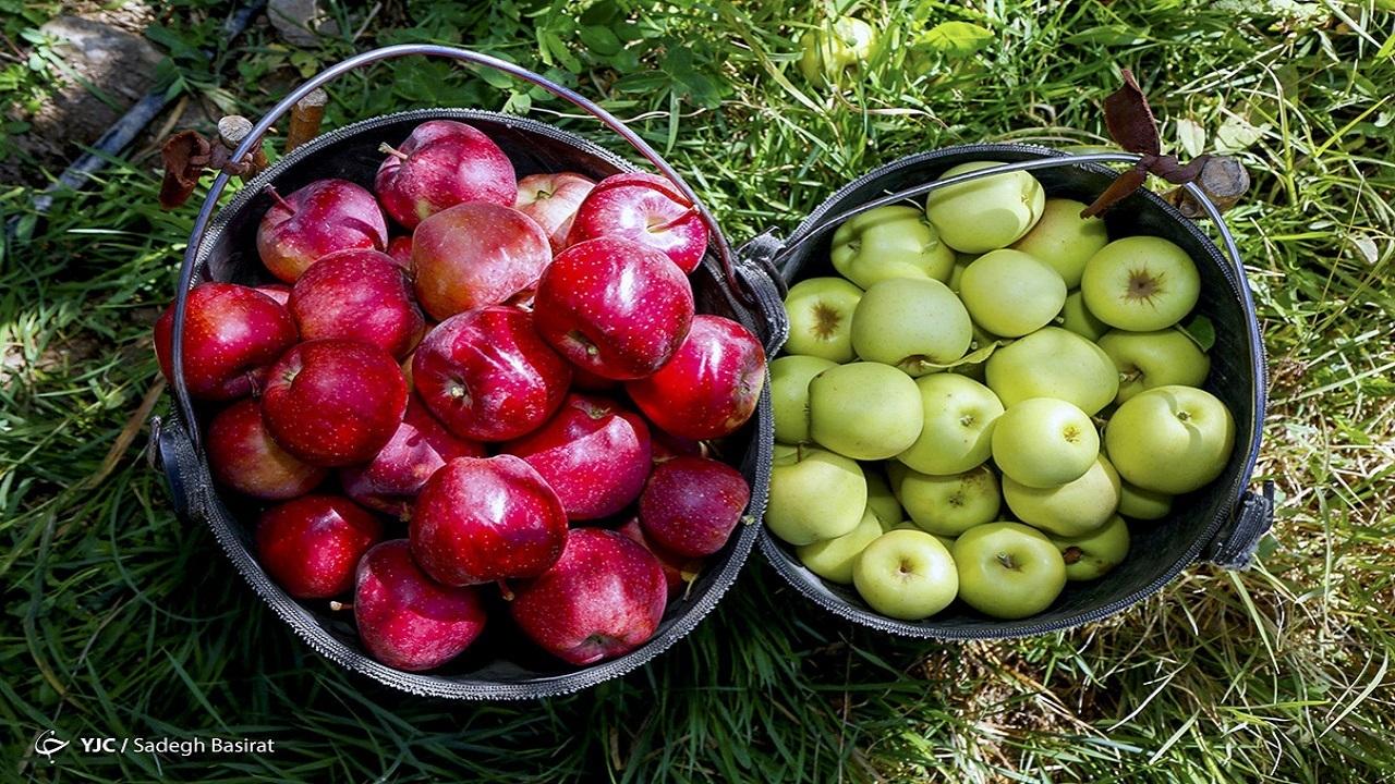 تولید میوه مازاد بر سرانه مصرف کشور