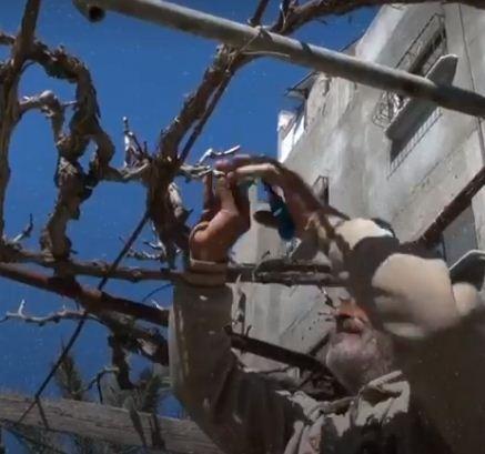 پیرمرد فلسطینی برای امرار معاش، سقف خانهاش را به باغچه تبدیل کرد+ تصاویر