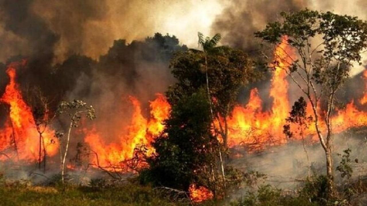 وقوع ۱۱ مورد حریق در جنگل های گرگان