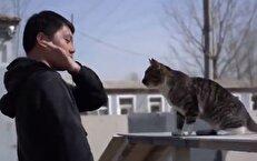 آموزش حرفهای گربهها برای حضور در عملیاتهای ویژه + فیلم