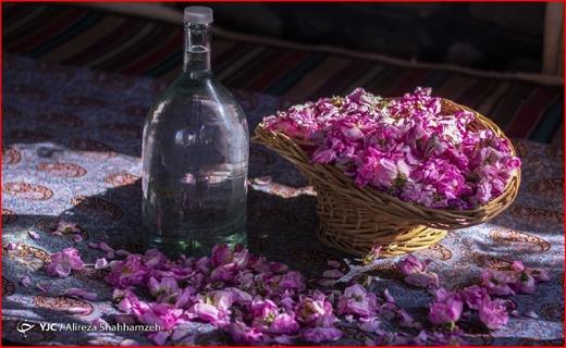اما و اگرهای اجاره نشینی در فصل کرونا/ مسجد مقدس جمکران تعطیل است؟/ رد پای خام فروشی در صنعت گلاب و اسانس