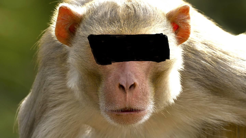 سرقت از مردم با استفاده از میمون ها! +تصاویر سارقان