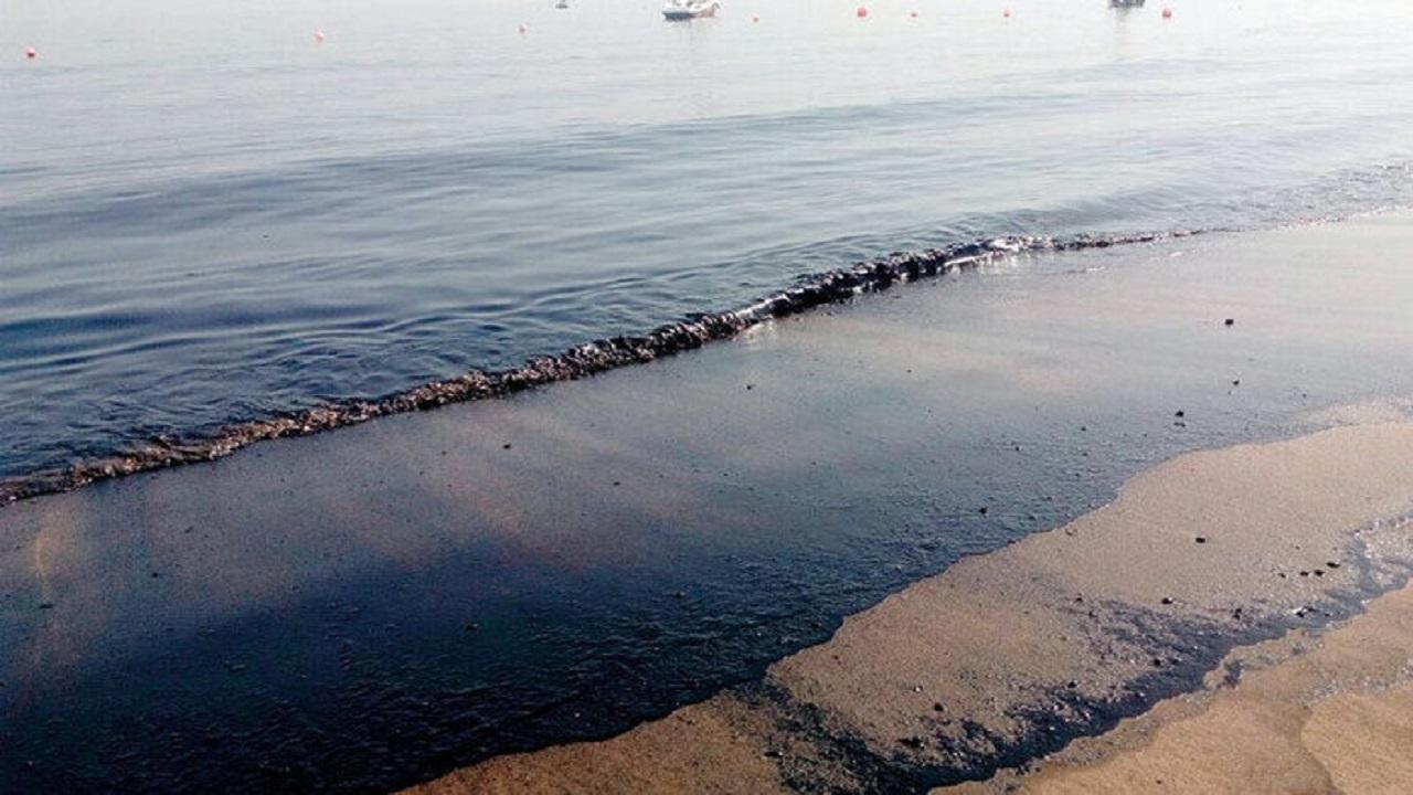 آلودگیها نفس آبزیان خلیج فارس را به شماره انداختهاند