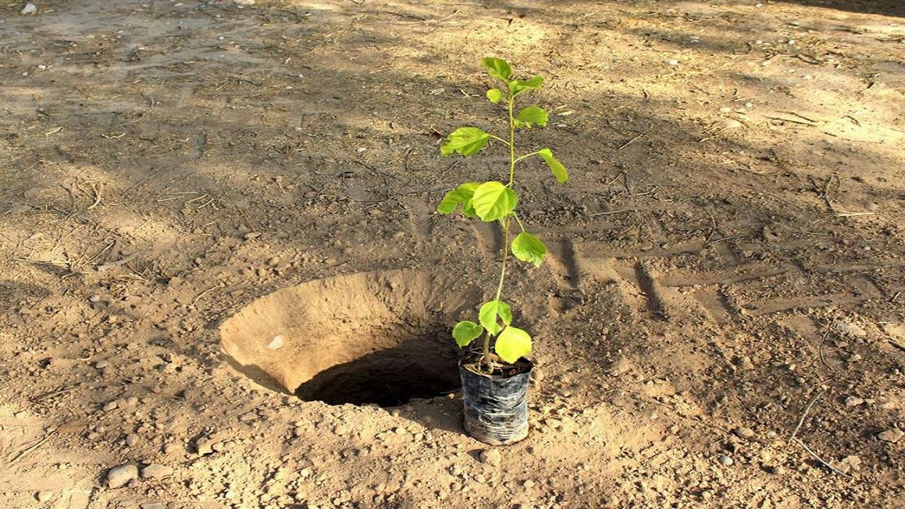چگونه درختان میوه را پیوند بزنیم؟