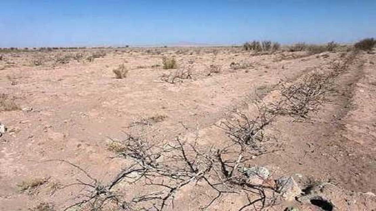 تجویزی شفا بخش برای خشکسالی