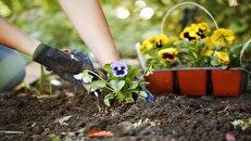 چگونه از باغچه مان بیشترین استفاده را ببریم؟