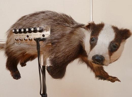 عجیب ترین سازهای موسیقی که تاکنون دیده اید