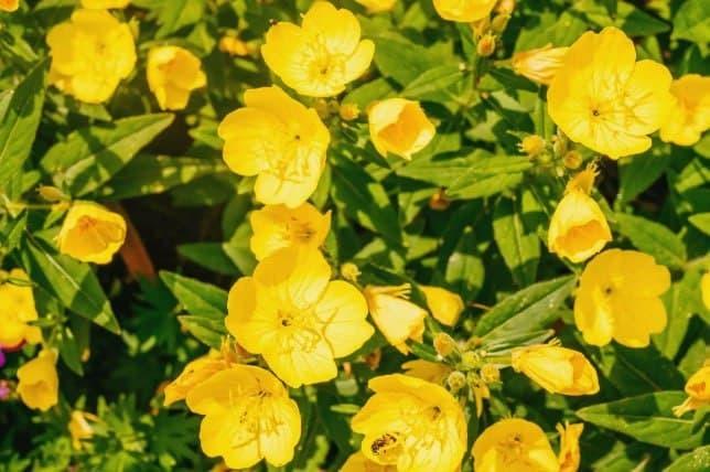 ۱۵ گلی که در شب شکوفا میشوند