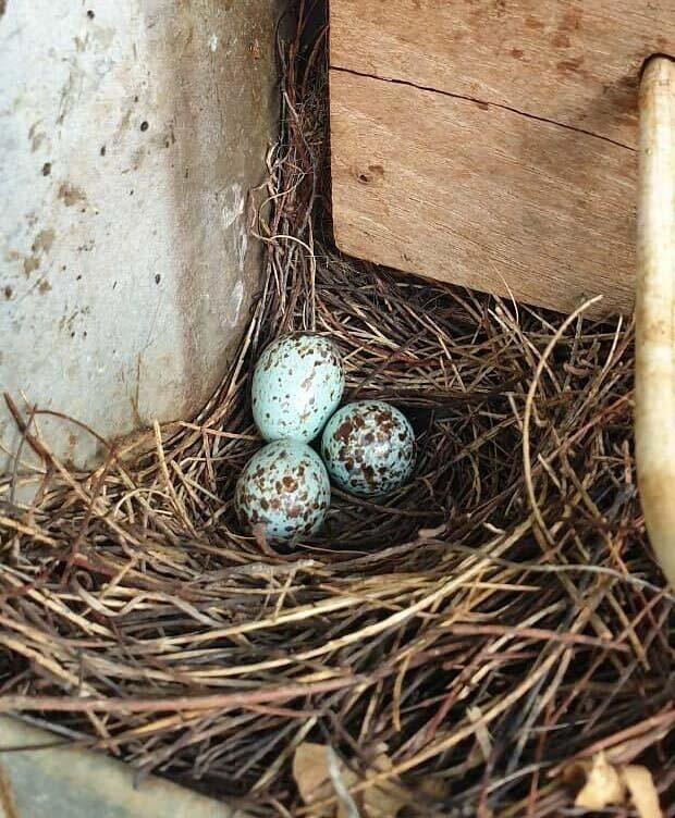 45 روز زندگی در تاریکی برای نجات پرنده ای از جعبه برق