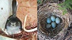 ۴۵ روز زندگی در تاریکی برای نجات یک پرنده