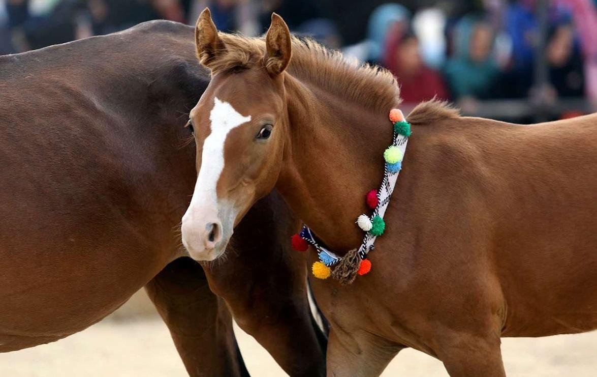 برترین اسب های جهان