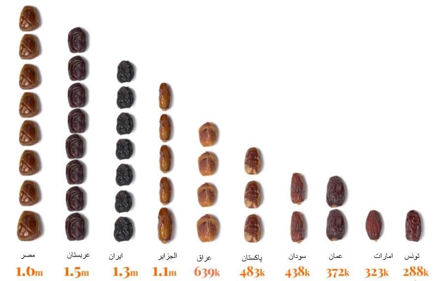 آنچه از خرما نمیدانید؛ از گونهها تا گران قیمتترین خرما در جهان