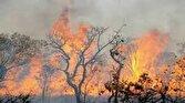 آتشسوزی در جنگلهای بلوط کهگیلویه و بویراحمد ادامه دارد
