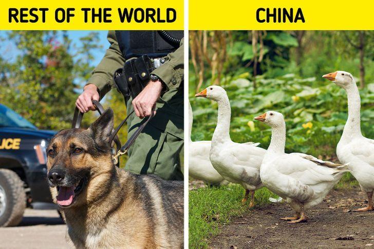 حقایقی جالب و خواندنی درباره فرهنگ مردم چین + تصاویر