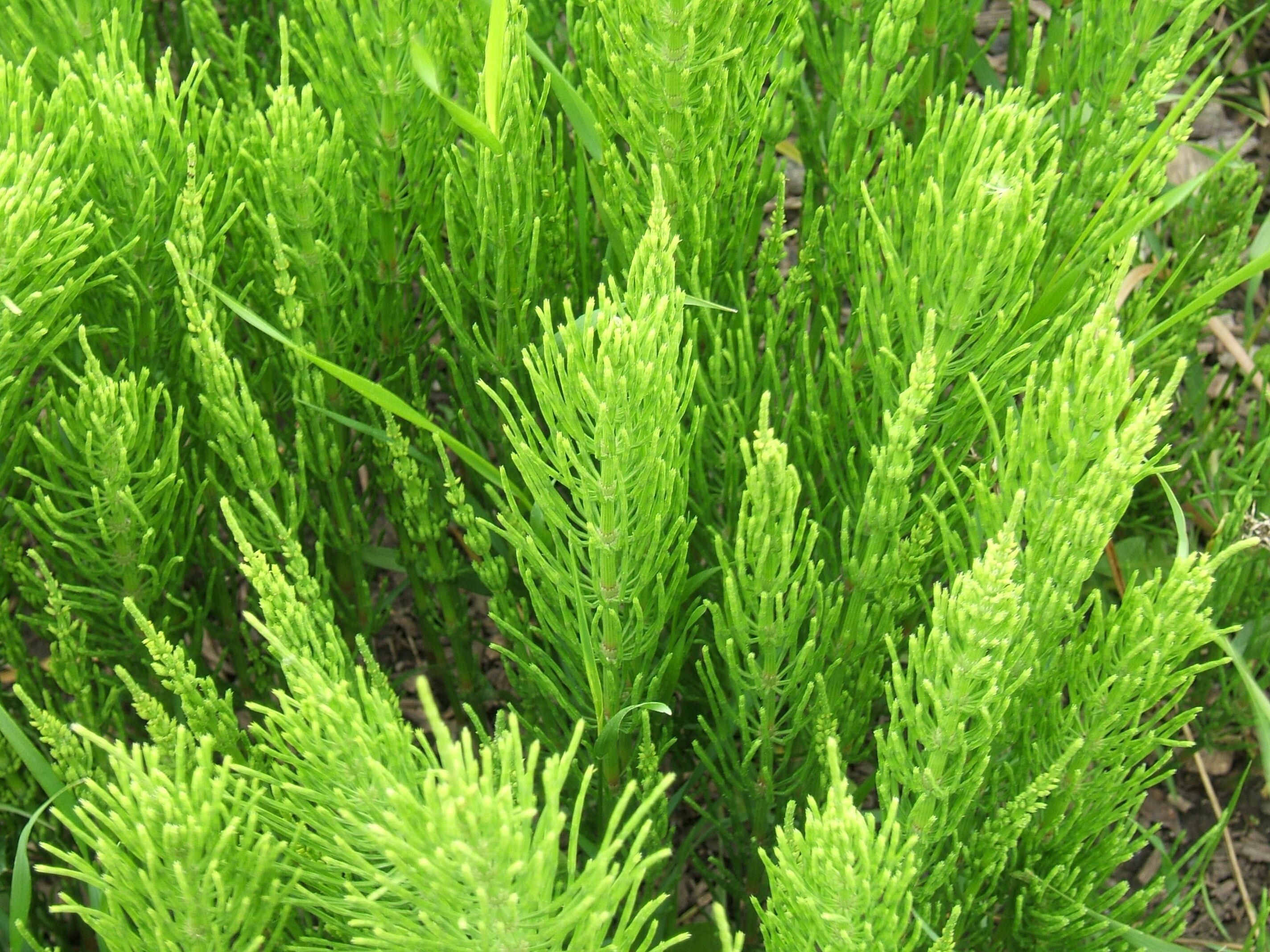 درمان ریزش مو با عصاره گیاهی