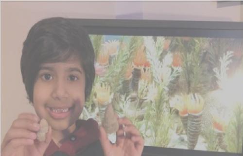 فصیلی با قدمت ۵۰۰ میلیون سال که توسط کودک ۵ ساله کشف شد