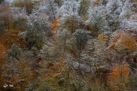 بارش برف در ارتفاعات لنگرود