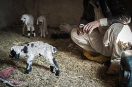 بدلیل نبود بهداشت کافی در منطقه، دام های بعضی از روستاییان دچار بیماری شده و مدتی پس از تولد از بین میروند و همین مسئله بر مشکلات روستاییان می افزاید.