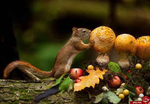 تصاویری زیبا از زندگی حیوانات در حیات وحش