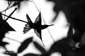 برندگان نهمین دوره مسابقات سالانه عکاسی آئودوبن