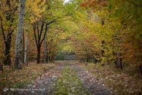 طبیعت پاییزی همدان