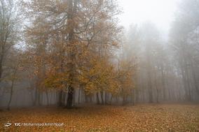 طبیعت پاییزی مازندران