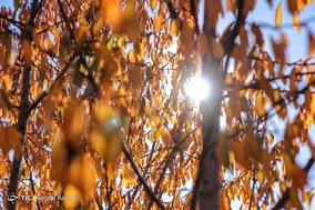 پاییز ایهر
