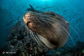عکسهای برگزیده مسابقه عکاسی اقیانوس سال ۲۰۱۸