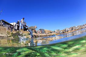 برندگان مسابقه عکاسی زیر آب سال ۲۰۱۹