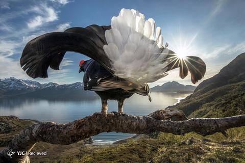 برگزیدگان مسابقات جهانی عکاسی طبیعت 2019