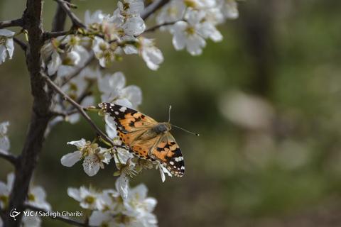 بهار یاسوج