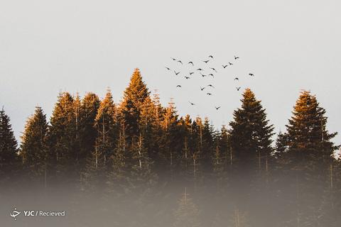 تصاویر منتخب از طبیعت جهان