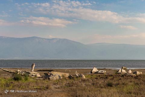 آشوراده، جزیره متروک