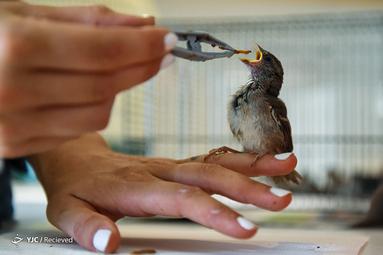 مراقبت از حیوانات در بیمارستان حیات وحش فرانسه به علت گرمای بی سابقه در اروپا