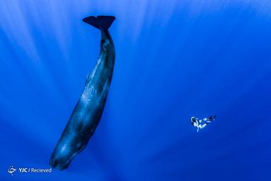 منتخب تصاویری از نهنگها