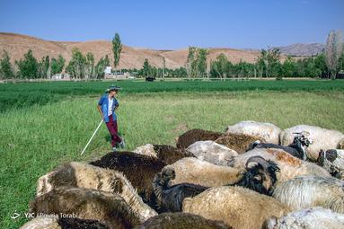 پسری که به همراه خانواده ی خود از اهواز به روستای مهدی آباد کوهرنگ آمده ، اوقات فراغت خود را با چراندن گوسفندان میگذراند، روستای مهدی آباد
