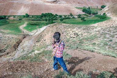 محمد صالح ،پسر یک خانواده عشایر که مشغول چراندن گوسفدان است. فرزندان در عشایر هر یک وظیفه ای در خانواده دارند، روستای نیاکان