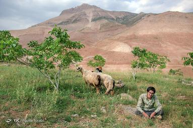 عارف که از شهرکرد به روستای پدری خود آمده و تابستان خود را با چراندن گوسفندان میگذراند، روستای نیاکان