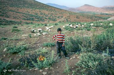 وحید 12 ساله در حین چراندن گوسفندان با ابزاری به اسم «دکِر» خار های دشت و صحرا را برای مصرف دام یا سوزاندن جهت گرم شدن میکَنَد. محلی که او به همراه برادرش برای چرا میروند محل دفع زباله های شهر چلگرد میباشد و فضای بسیار آلوده ای دارد، منطقه گندآبه