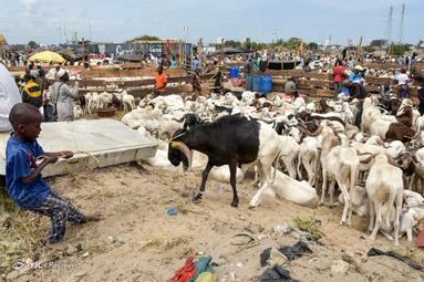 عید قربان در شهر آبیجان ساحل عاج