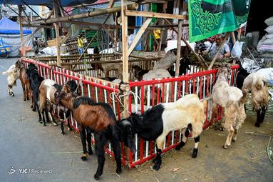 عید قربان در اندونزی