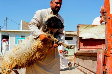 عید قربان در عراق