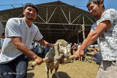 عید قربان در قرقیزستان