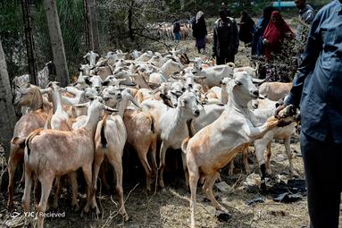 عید قربان در کنیا