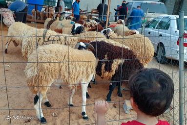عید قربان در لیبی